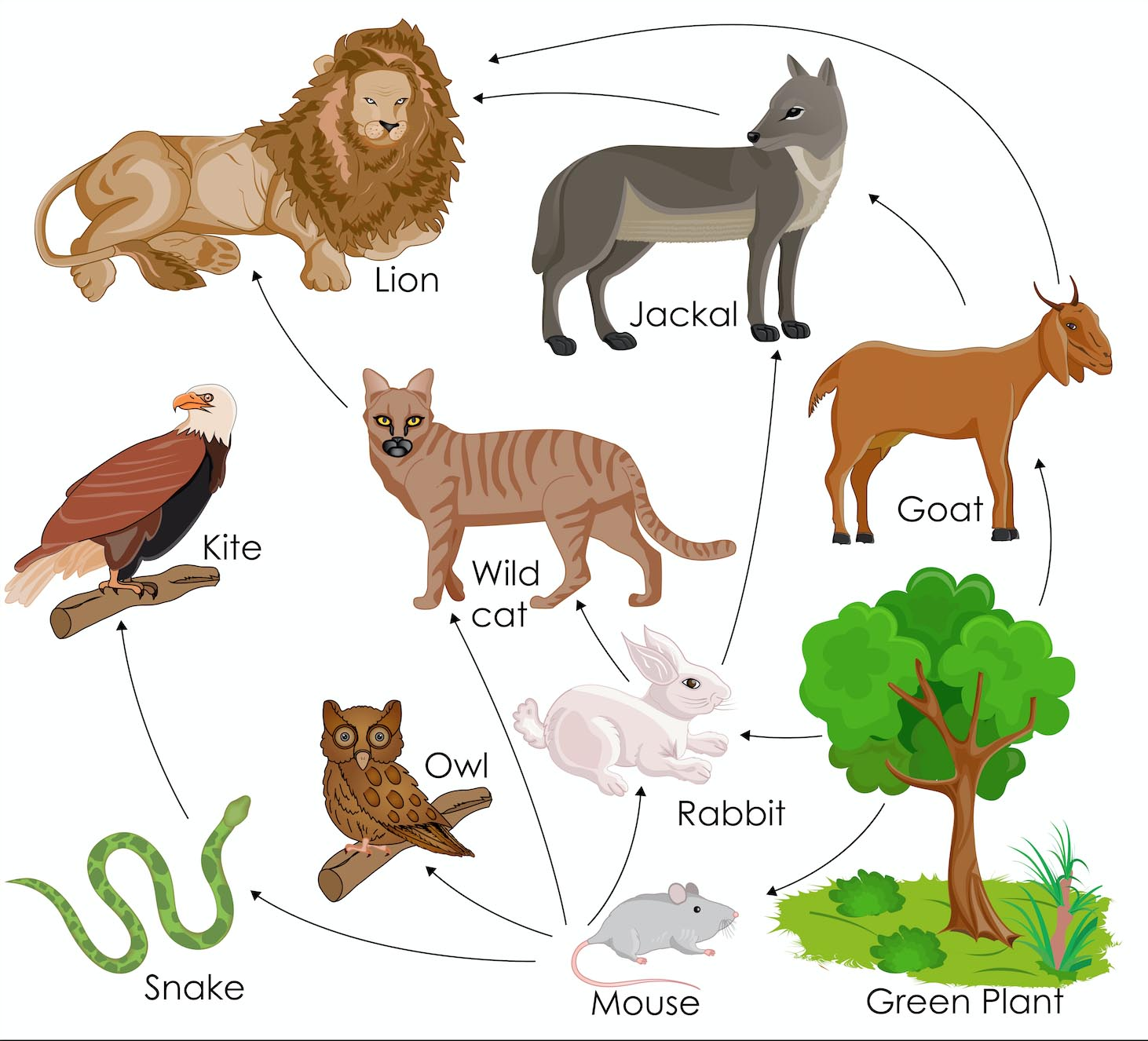 Food Webs in an Ecosystem Science Games | Legends of Learning