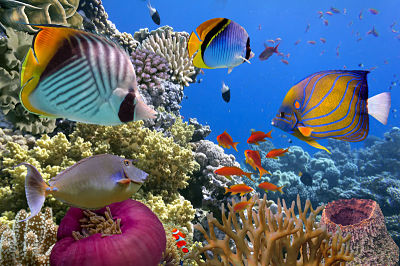 Use Earth Day to teach students about preserving natural areas, such as coral reefs.