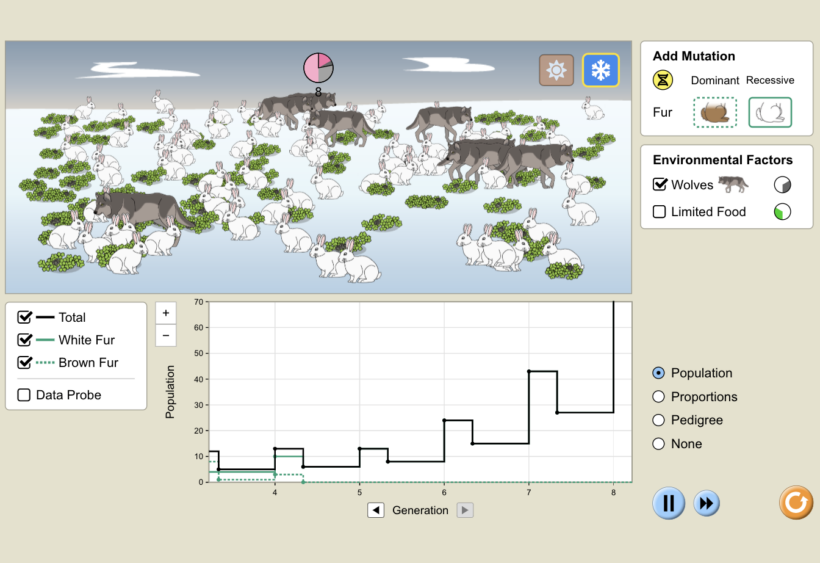 A simulation from PhET Interactive on Natural Selection, allowing students to visualize a population of rabbits over time.